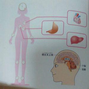 ホメオスタシス~心と体を安定した状態に維持する仕組み①