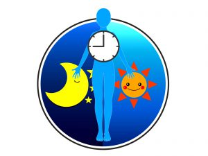 一年のリズムも持つ体内時計について